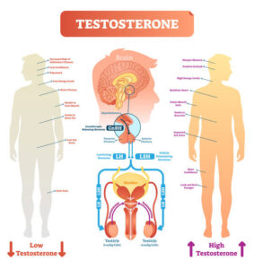 olika effekter av testosteron nivaer